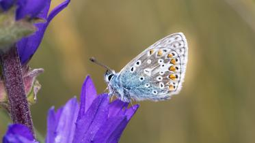Progress for Pollinators hailed.