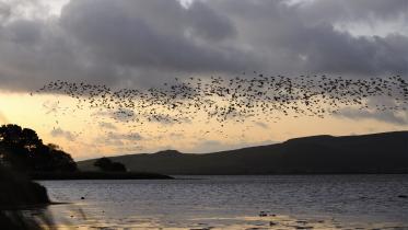 Wild goose walk up Wardlaw